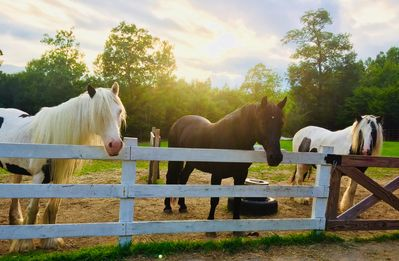 Photo for Gated 40 acre Horse Farm w/best mountain views in N. Conway