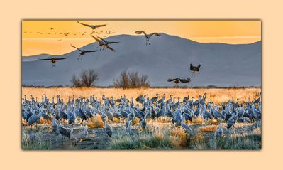 Teresa Johnson our guest took this beautiful photo of the Sandhill Crane Winter)