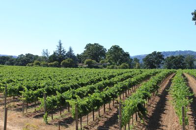 View of vineyard and home from south side of property