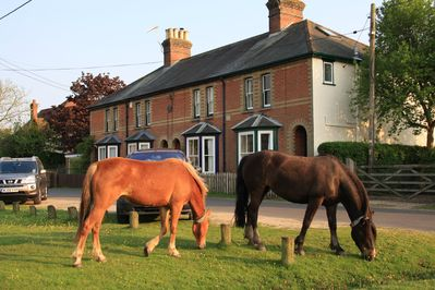 Ponies grazing on Waters Green in front of New Forest cottage