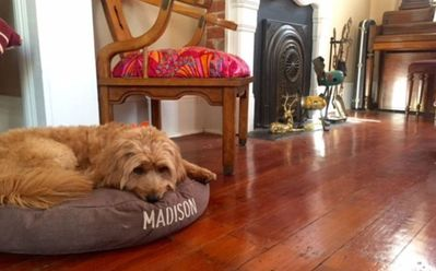 Meet Madison, the home's namesake. She lives next door and is super friendly.