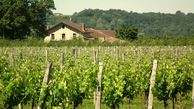 Photo for Dordogne Vineyard Farmhouse Near Bergerac In The Heart Of The Famous Wine Regions