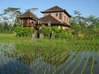 An outstanding place that provides you with the experience of the real non-touristic Bali! Beautiful