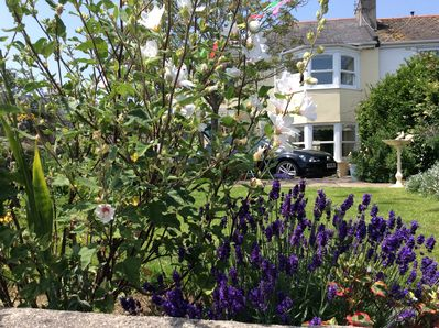 The small front garden summer 2019 - a lovely place to enjoy a glass or a cuppa!