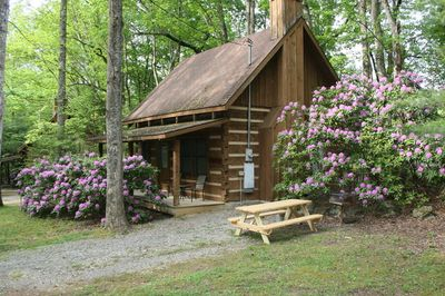 Picnic table and grill. Rhododendrons in bloom.