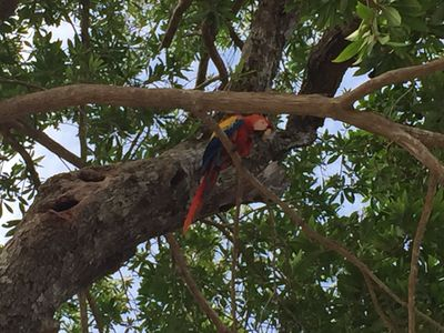 One of the resident Macaw birds