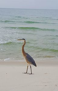Photo for Hurry~July 22nd Thru 25th Available! Private Beaches~Romantic Getaway~Family Fun