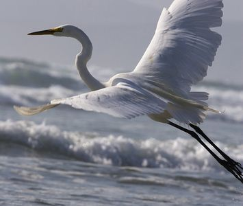 Follow me to Egret Landing for a relaxing luxury villa sure to please everyone