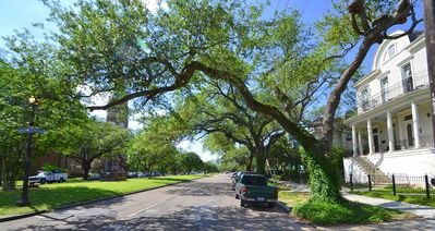 Beautiful view of the Avenue, draped by live oaks and fronted by a grassy median