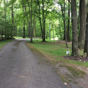 Driveway leading to house through woods