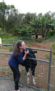 Photo for Cow cuddling, rescue sanctuary. WC friendly guest house on 48 acres, hosted B&B