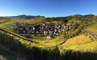 Photo for Winehouse 1751 near Colmar, one hour away from Germany and Switzerland