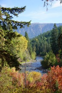 Photo for NEW LISTING  Panabode Log Cabin On The Banks Of The Scenic Chiwawa River