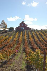 Barn/Vineyard in the fall.