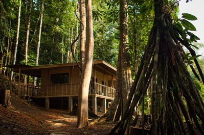 Cabin stands in the middle of the primary rain forest.