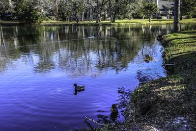 Beautiful scenery you will enjoy on your walks around the Plantation!