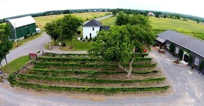 Photo for Italian Winery Farmhouse 3 Bed 3 Bath Wood Fired Pizza And Wine Steps Away
