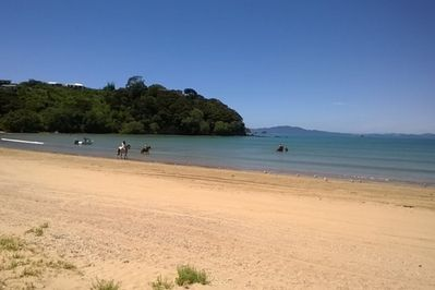 Tokerau Beach life - always interesting