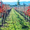 Our Bernat Vineyard, home to us and our two vacation retreats.