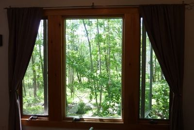 Magnificent forest view from the bedroom window!