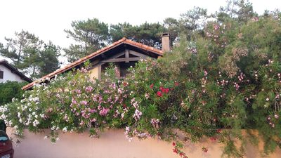 Photo for Landais 200 meters from the beach in Capbreton (Landes, France)