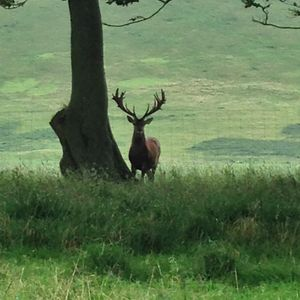 One of our magnificent stags.