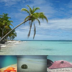 Photo for Sail To***Tobago Cays St Lucia  Martinique Sail All Inclusive Caribbean Yacht