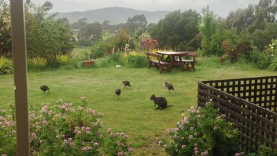 Photo for 1BR Apartment Vacation Rental in Kingston, TAS