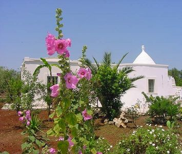 Photo for Wonderful Restored Trullo and Cottage with POOL in Olive Grove! FREE WIFI