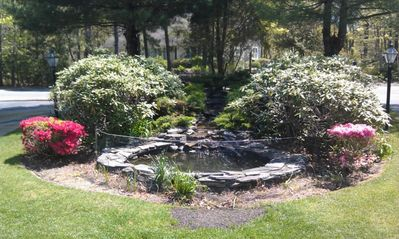 Koi pond in front yard, near horse shoe driveway