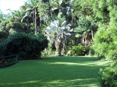 View of yard as you approach entry, from the backyard. Rare silver palm in rear.
