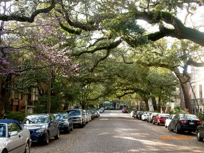 Renowned Jones St.  The 'prettiest street in the South'
