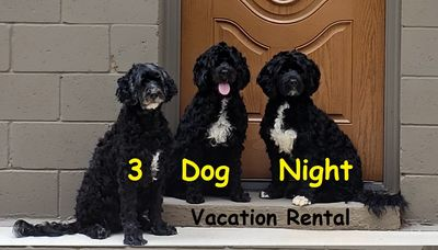 Photo for 3 Dog Night - Dog Friendly 3 miles to TIEC Tryon International Equestrian Center