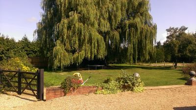 The wonderful willow tree in the front garden.