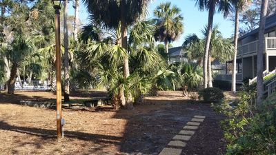 View, path from back deck to the pool under the palm trees