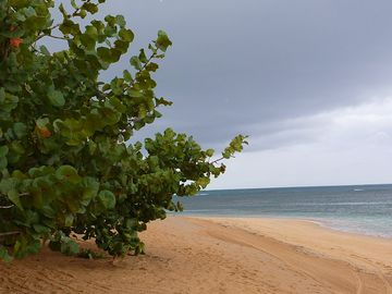 Come Pan, Las Terrenas, Dominican Republic