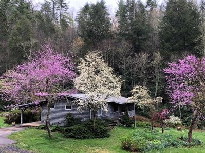 Redbuds and dogwoods surround Myra's in April.