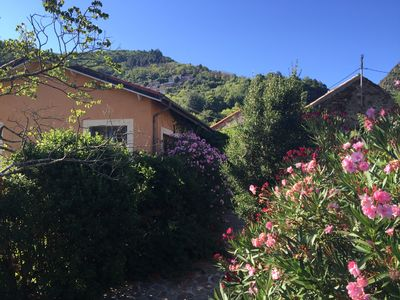 "Photo for House ""vigneronne"", St Vincent d'Olargues (3 Stars of France)"