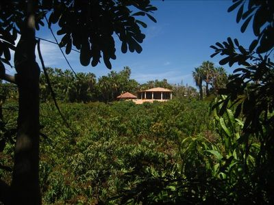 welcome to the plantation!    Guest casita among the mangos!