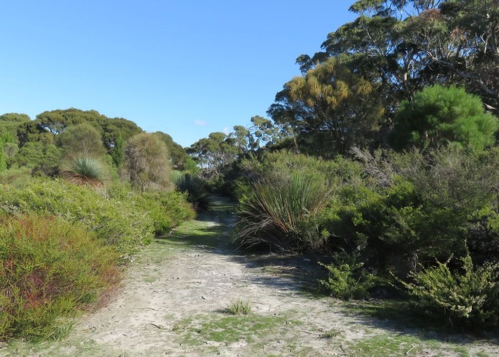 Clearwater Haven - secluded beach, native bush