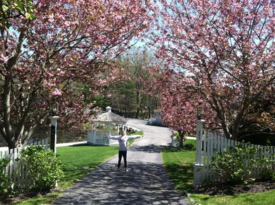 Main Street Entrance with Cherry Trees