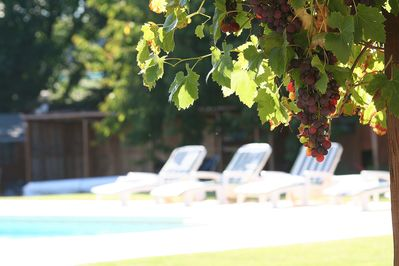 A glass of wine by the pool?