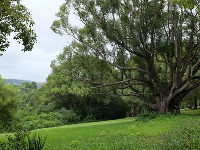 Photo for Tranquil rainforest escape, close to heritage village of Bangalow
