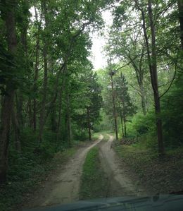 The driveway: 900 feet to the Bungalow and tranquility.