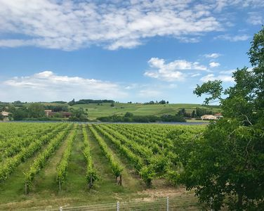 Photo for Apartment with terrace overlooking vineyard