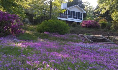 Photo for Beautiful Lakefront 4 Bedroom Home On Lake Keowee
