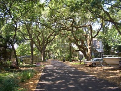 Our street is shaded with beautiful live oaks