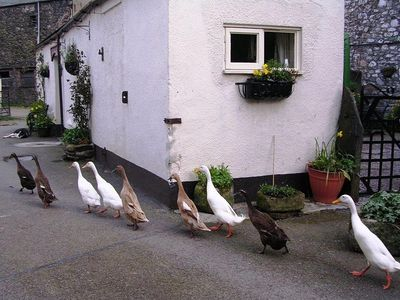 Photo for 1BR Cottage Vacation Rental in Bassenthwaite