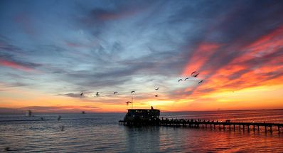 "Photo for Anna Maria Island Rentals - Beach Front - ""Angels Envy"""