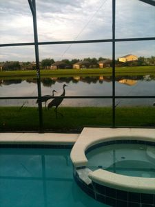 Enjoying wildlife around the lake at sunset while sitting by the pool relaxing.
